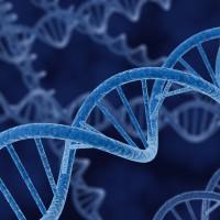 Genes do not Necessarily Determine Behavior